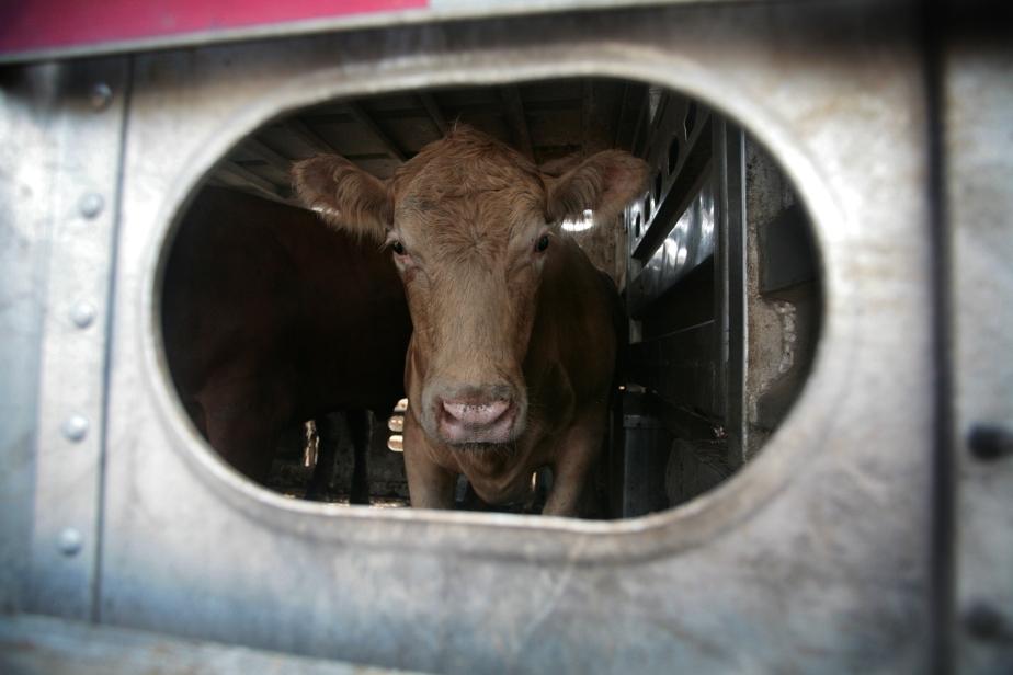 US-Wahlkampf im Falter: Das Fleisch derEinwanderer