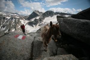Vorsicht beim Aufstieg! Die listigen Ziegen stehlen Wanderern gern die Müsliriegel aus dem Sack.
